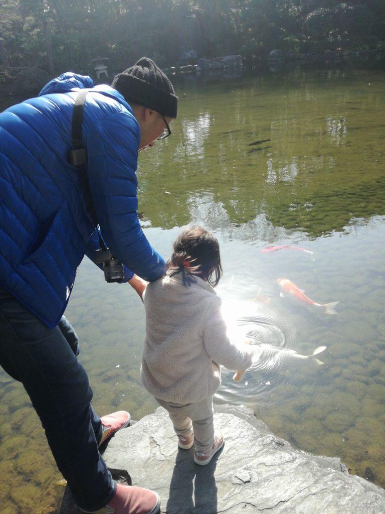 石橋文化センターの鯉