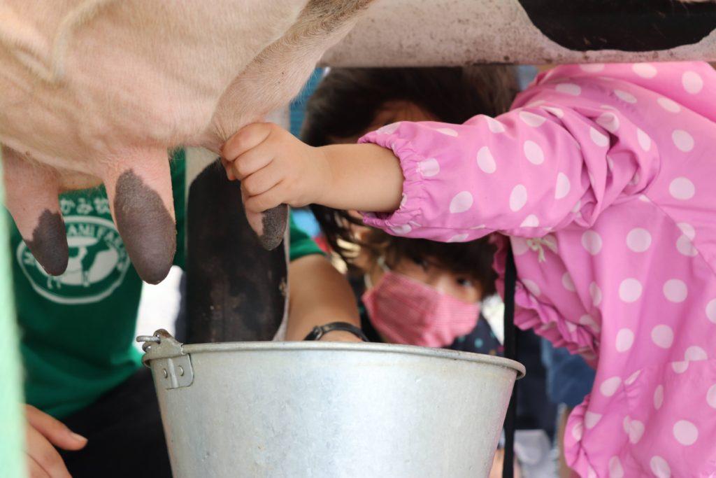 むらかみ牧場で乳搾り体験の様子